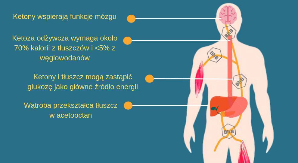 descripción de cetosis